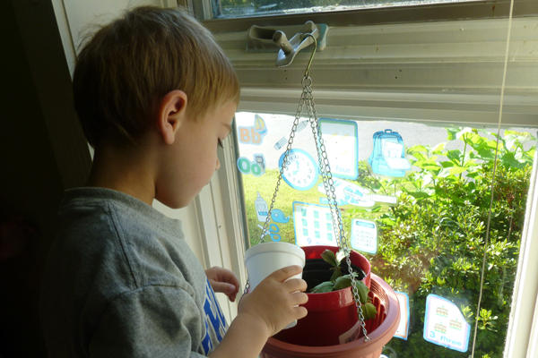academics early childhood caring for plant